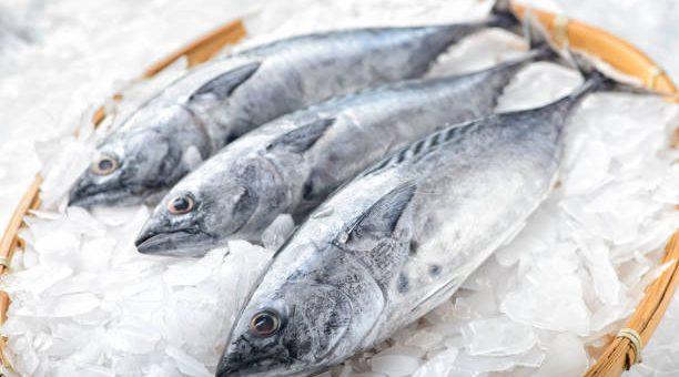Comment conserver et consommer le poisson frais ou cru ?
