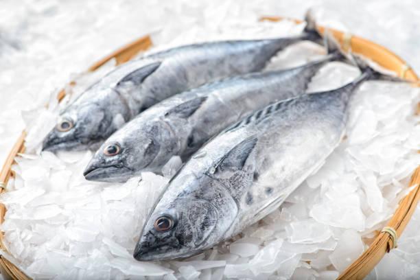 Filet de thons frais conservé sur de la glace